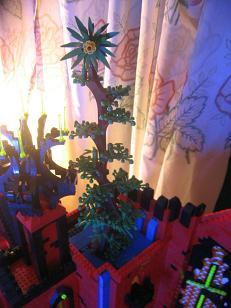 tall-tree-04.jpg