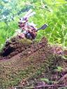 hewmakaan_on_the_prowl.jpg