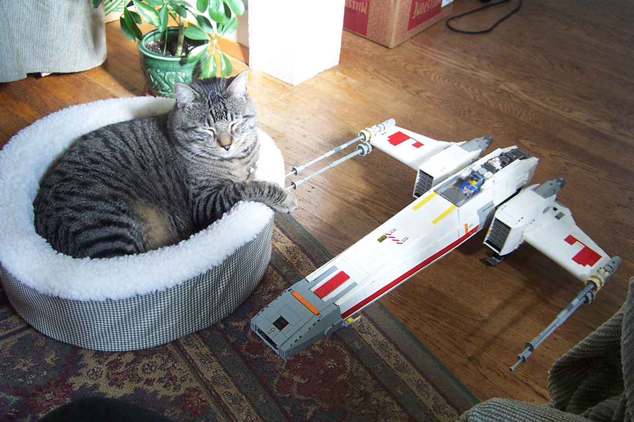 rx-wing-space-cat-sleeps.jpg
