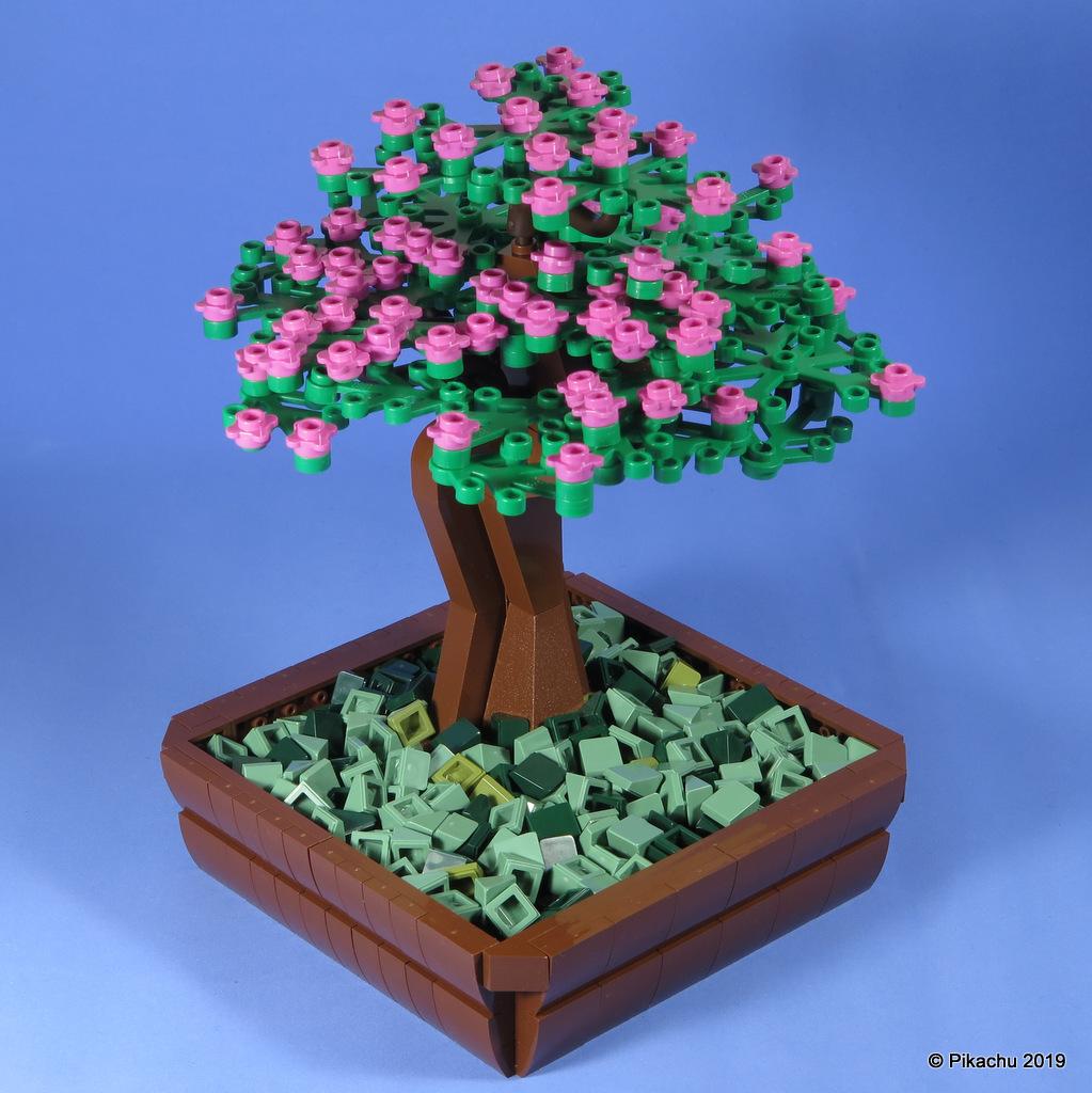 bonsai-001.jpg