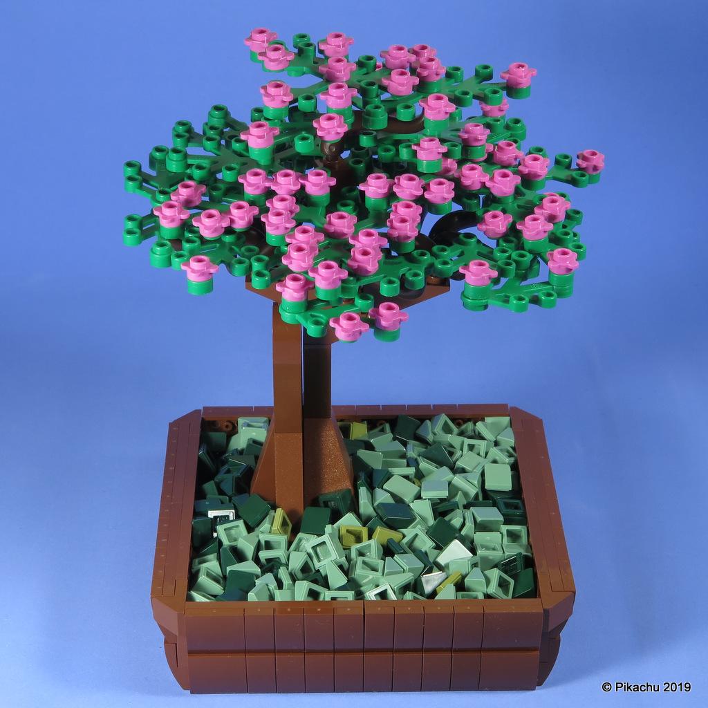 bonsai-002.jpg
