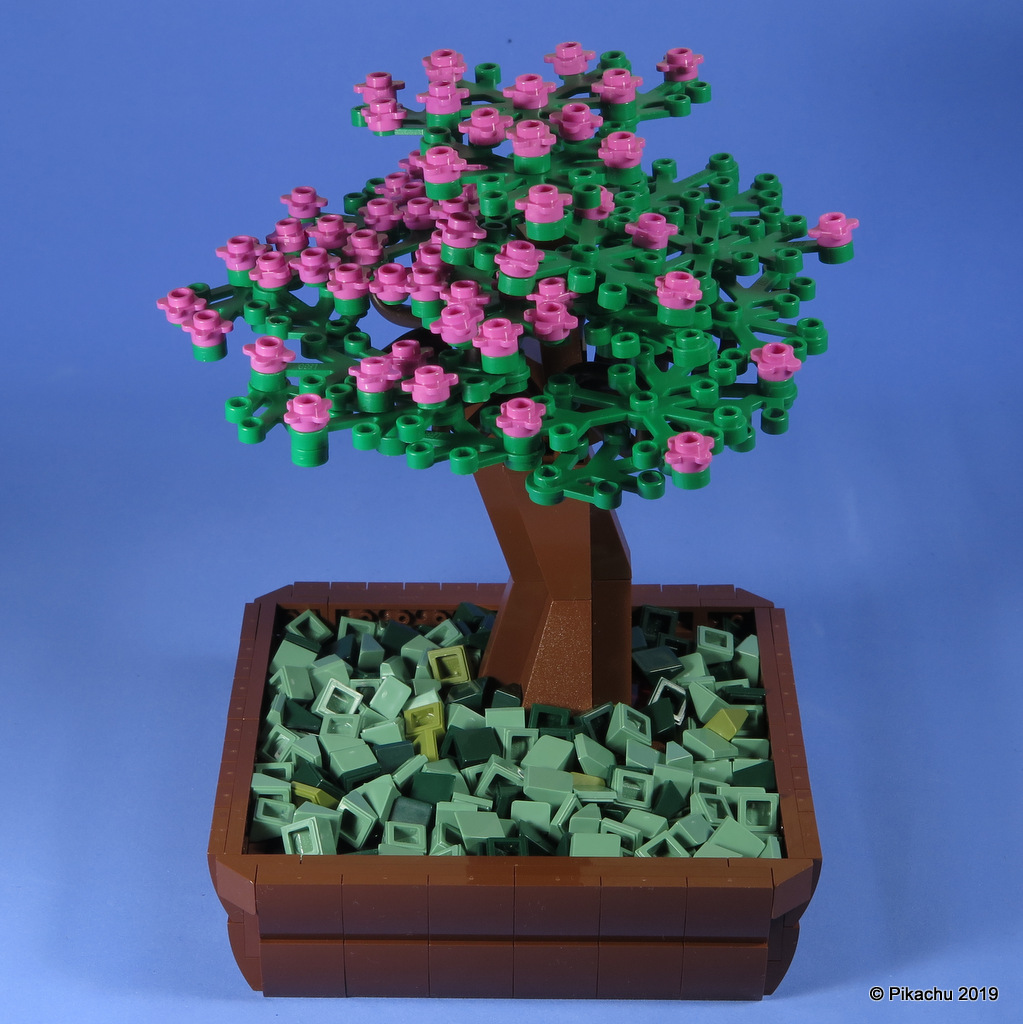 bonsai-003.jpg