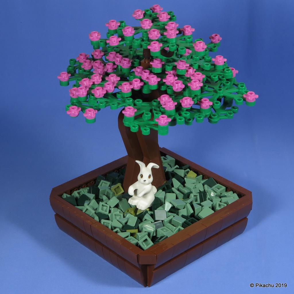 bonsai-004.jpg