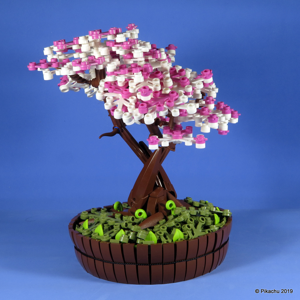 bonsai-101.jpg