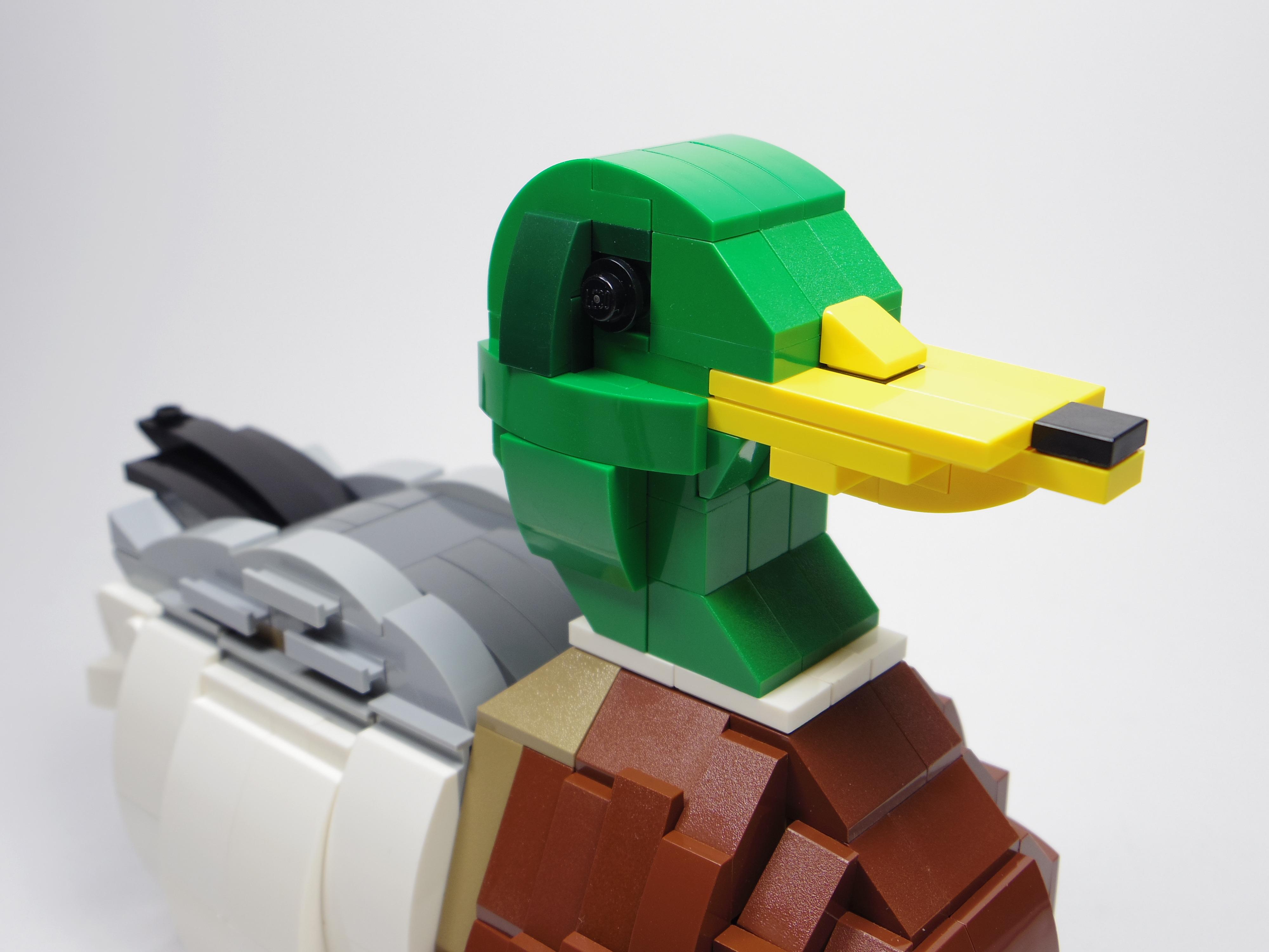 [查米]公園小動物系列-公的野鴨子